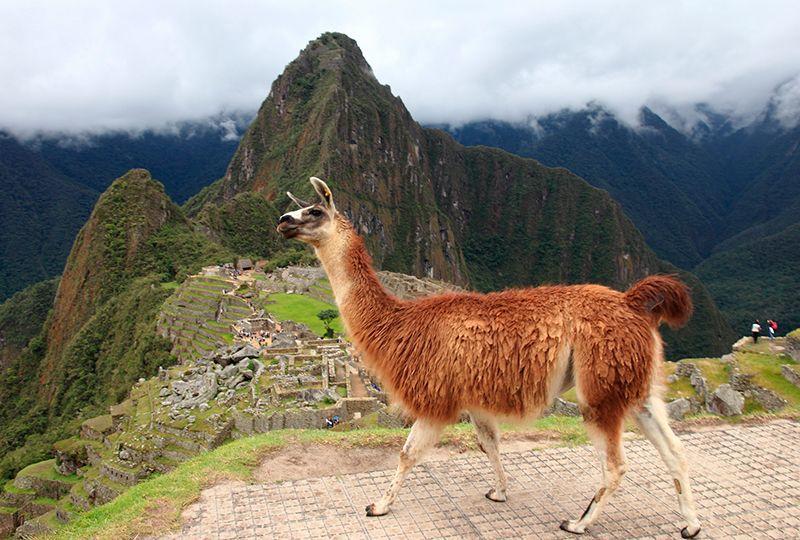 Cusco Montaña de los 7 Colores HuaynaPicchu 5 días y 4 noches